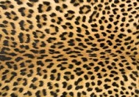 (U.S. / Canada Orders Only) Leopard -  DESIGNER FAUX FLOOR, MATS/RUGS