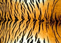 (U.S. / Canada Orders Only) Tiger -  DESIGNER FAUX FLOOR, MATS/RUGS