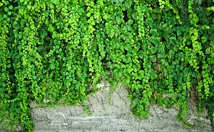 Concrete Vines 4 (Horizontal Design)