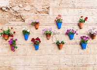 Flower Pots 6 (Horizontal Design)