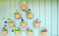 Flower Pots 9 (Horizontal Design)