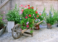 Flower Wheelbarrow (Horizontal Design)