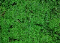 Nature Greenery 11 (Horizontal Design)