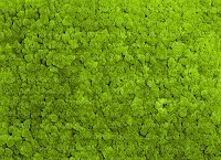 Nature Greenery 16 (Horizontal Design)
