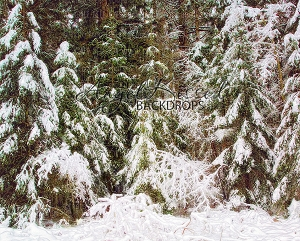 White Forest 1 (No Sun) - 8x10 (Horizontal Design)