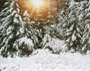 White Forest 2 (With Sun) - 8x10 (Horizontal Design)