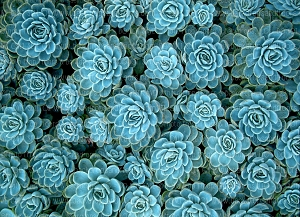 Succulents 2 (Horizontal Design)